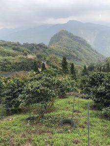 阿里山コーヒー農園